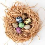 Easter photo Eggs nest home..