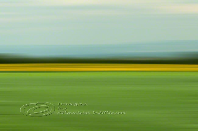 Abstract Photo, fields of green, spring photo, yellow, green, 12x18&quot; print