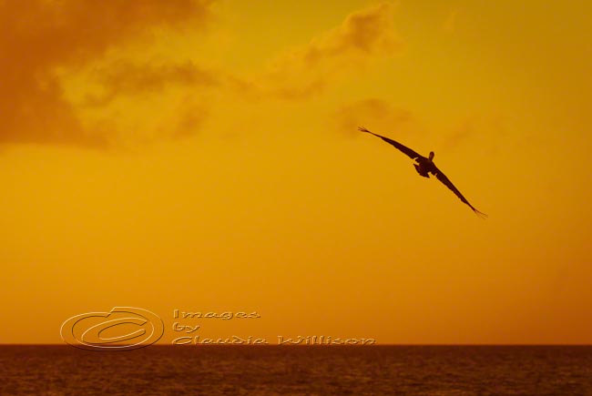 Sunset photo beach ocean dream flying orange 8x12&quot; print