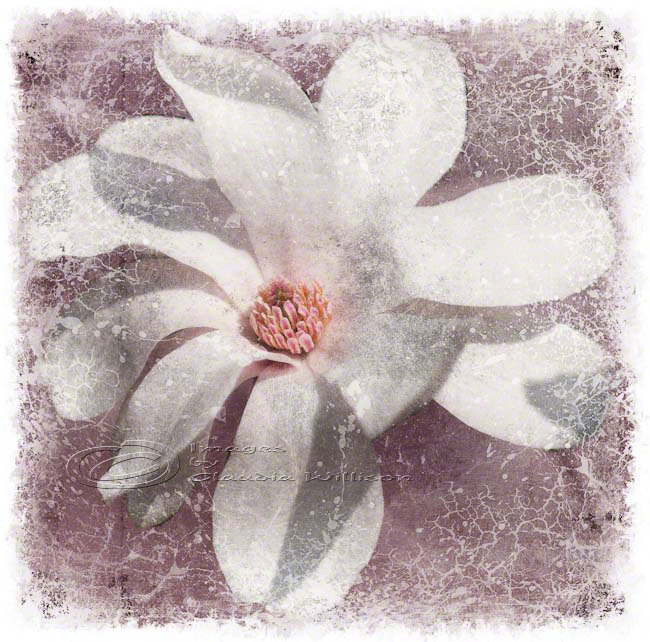 "White magnolia flower photo home decor spring fine art, 10x10"" print"