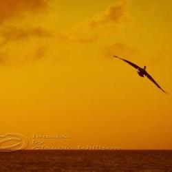 Sunset photo beach ocean dream flying orange 8x12&amp;quot; print