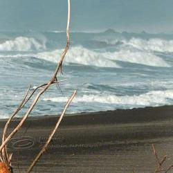 Beach Photo surf ocean waves black sand log print 8x12""