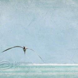 Flying seagull beach photo ocean grunge look teal print 8x12""