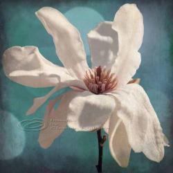 Flower photo home decor white magnolia spring fine art, 12x12&amp;quot; print