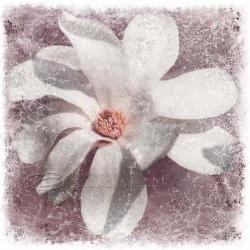 White magnolia flower photo home decor spring fine art, 10x10&amp;quot; print