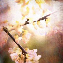 "Blossoms Spring photo home decor pink dream 8x10"" print"
