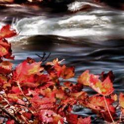 Season Photo fall photo artistic photo warm colors river 8x12&amp;quot;