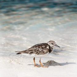 Beach photo lonely bird ocean cute close-up teal 10x10&amp;quot; print