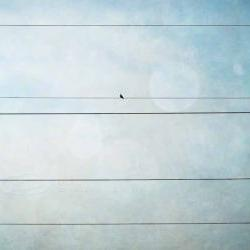 Bird on wire photo grunge teal whimsical print 8x12""